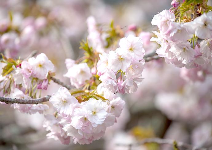 ドライブラリー2021春 in 関西